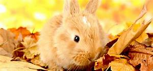 Wie Alt Werden Berner Sennenhunde : wie alt werden kaninchen ~ Eleganceandgraceweddings.com Haus und Dekorationen