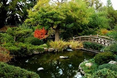 Pond Koi Ponds Garden Landscaping June Widescreen