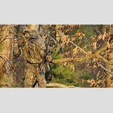 Orange Realtree Wallpaper   970 x 540 jpeg 172kB