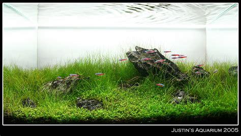 Hair Grass Aquascape by 10 Gallon Hc Hairgrass The Planted Tank Forum