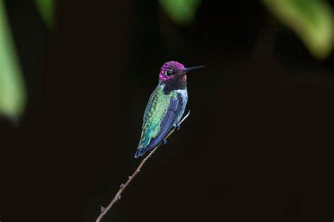 hummingbird close   hd birds  wallpapers images