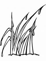 Grass Coloring Gras Mycoloring Ausmalbilder Nature Printable Ausdrucken Malvorlagen Kostenlos Zum sketch template