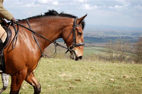 horse riding places holiday riders horseriding downs