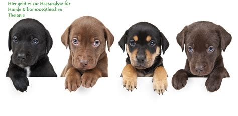 leberkrankheiten bei hunden