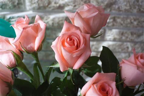 wallpaper-post: เดสก์ทอป วอลเปเปอร์ดอกไม้สวยๆ ดอกกุหลาบสีโอรส