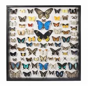 1000+ images about Insect Collection on Pinterest | Insect ...