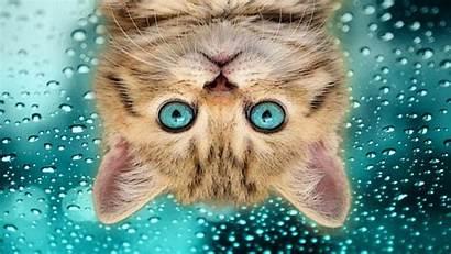 Cat Funny Desktop Backgrounds Wallpapers Background Laptop