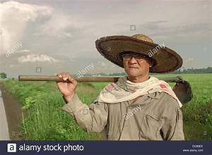 Malaysia.Kedah. In a rice field, a chinese worker, at Yan ...