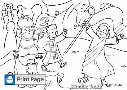Sea Moses Coloring Parting Pages Parts Divided