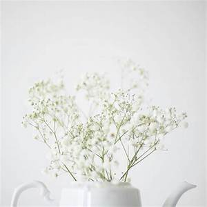Aesthetics Tumblr White Flowers Pictures to Pin on ...