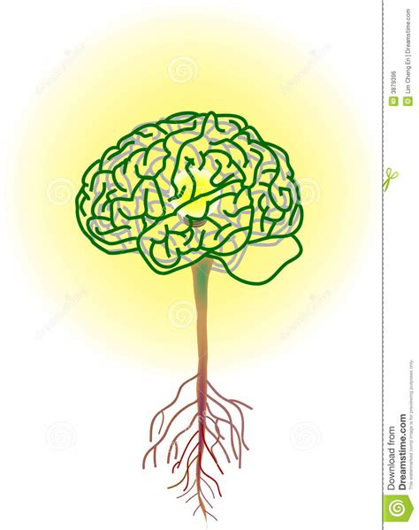 brain tree stock vector image of light roof symbol