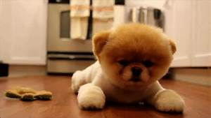 Cute Puppy GIF - Find & Share on GIPHY
