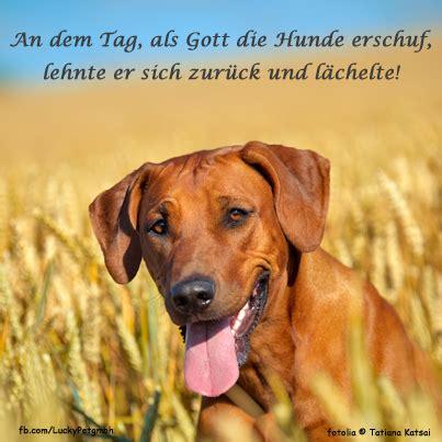Glueckliche Haustiere Was Hunde Brauchen by Hund Zitat Spruch Luckypet Zitate Wolf Hunde Ich