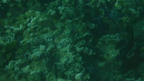 eel moray grouper