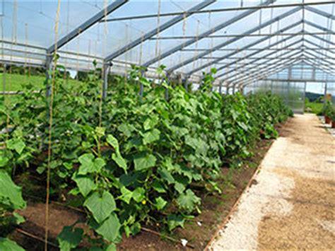 aubergine concombre prenez garde 224 l araign 233 e biobest