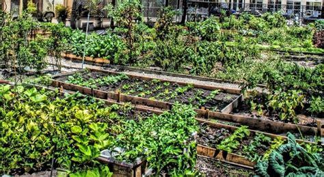 how to start a community garden how to start a community garden in your neighborhood