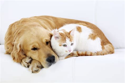 Famous Quotes About Dogs And Cats  Pets World