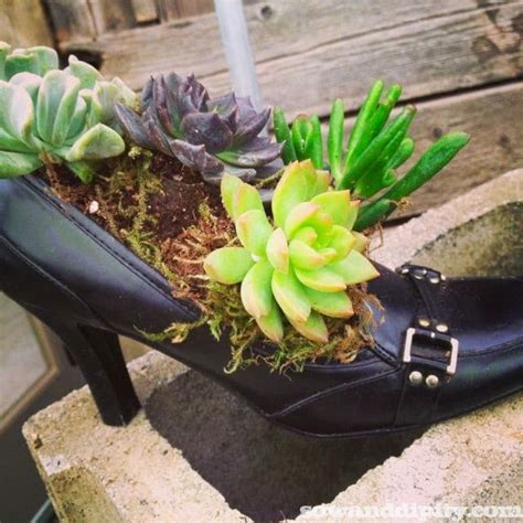 succulent planters youll love