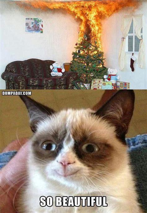 grumpy cat  beautiful