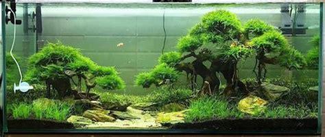 Bonsai Aquascape by How To Create A Beautiful Aquascape Aquaristic