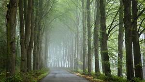 Road, Between, Long, Trees, And, Fog, Hd, Nature, Wallpapers