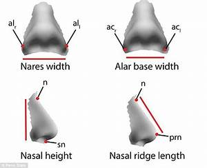 Climate affects nose shapes says Penn State researchers ...