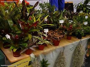 Pflanzen Für Terrarium : reptiquana terraristik und aquaristikb rse in altenburg ~ Orissabook.com Haus und Dekorationen