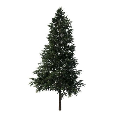Black spruce tree 3d model 3ds max files free download