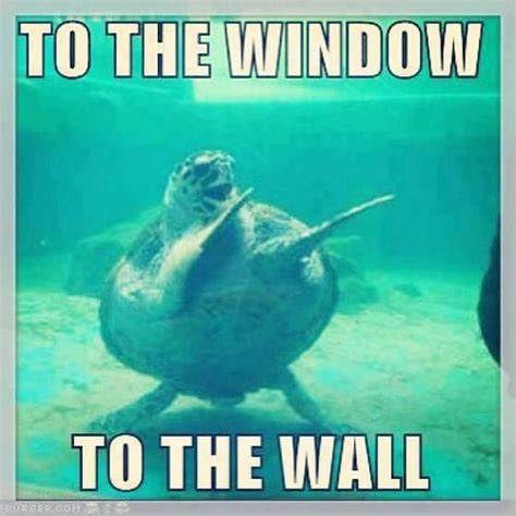 To The Window To The Wall Meme - 1000 images about turtle memes on pinterest best day ever finding nemo meme and ninja turtles