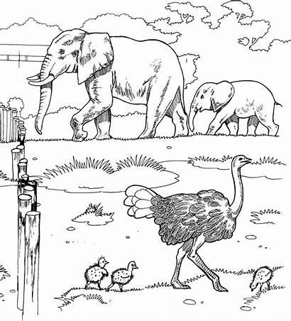 Coloring Pages Elephant Animals Wildlife Safari Animal