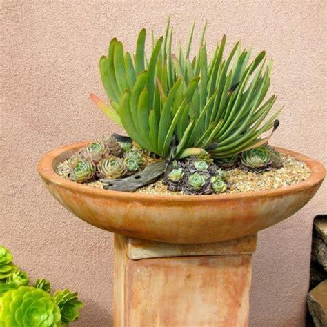 plantes exterieur toutes saisons succulentes plantes robustes pour toutes les saisons