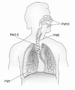 Pm Deposition In The Respiratory System  The Major Conduit