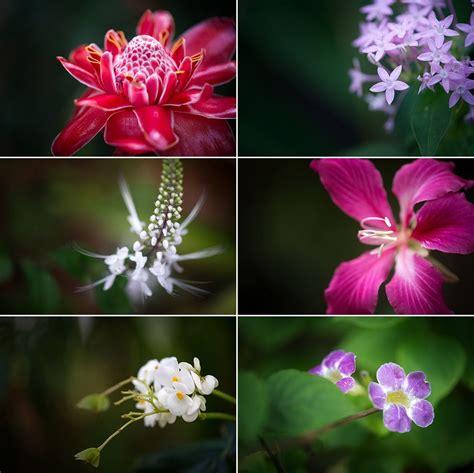 jamaican flowers travel photography   jamaican