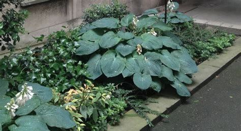 flowers for shaded patio loft ransfort patio garden gets windfall of mature plants as another shade space gets demolished