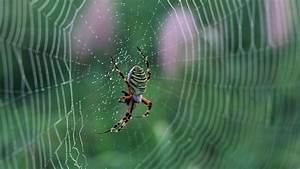 Spider Web Wallpapers Archives