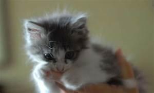 Laver Un Chaton : il se filme en train de maltraiter un chat provoque l ~ Nature-et-papiers.com Idées de Décoration