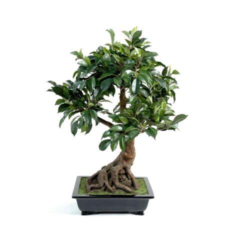 quelle plante pour une chambre quelles plantes choisir pour décorer sa chambre