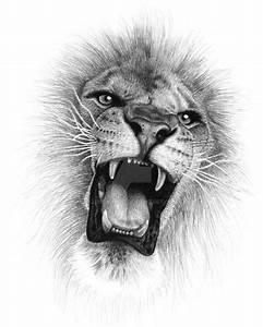 Lion Tattoo Drawing | danielhuscroft.com