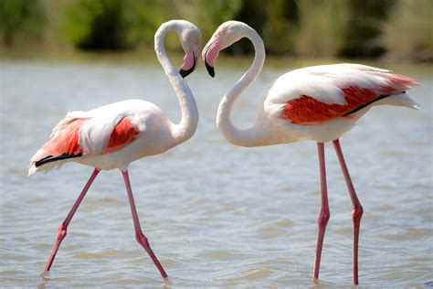 facts about flamingos bird trivia