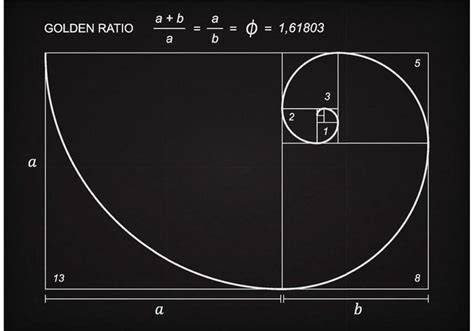 the golden ratio sketch template golden ratio scheme vector download free vector art