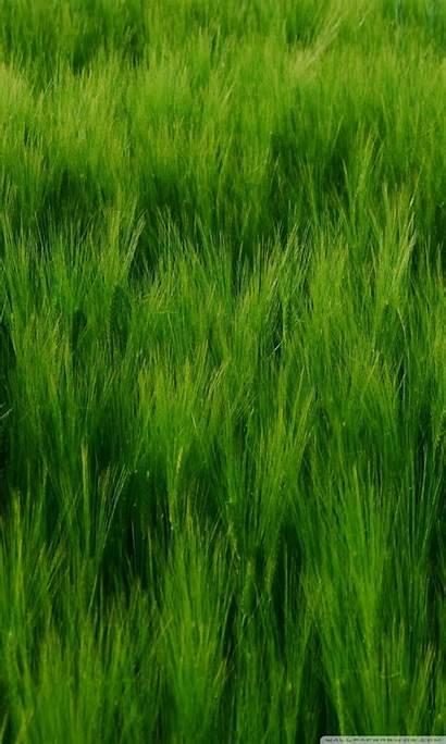 Barley Field Tablet