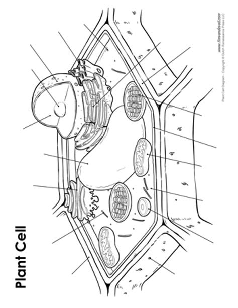 blank plant cell diagram tims printables