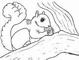 Squirrel Coloring Pages Printable Squirrels Kleurplaten Eekhoorn Herfst Preschool Colouring Drawing Animals Sheets Clipart Animal Cartoon Nut Sheet Books Getcoloringpages sketch template
