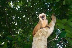 Madagascar Rainforest Wildlife