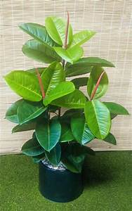 Artificial Rubber Tree Fake Rubber Tree Artificial