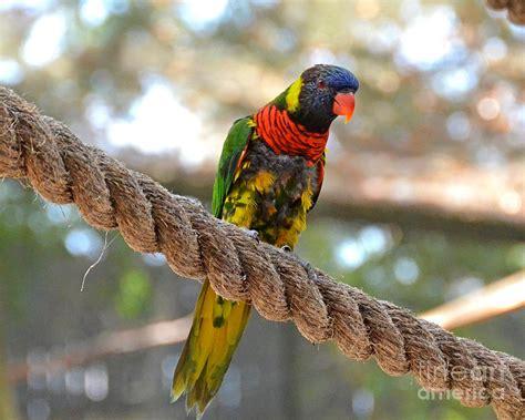 lori bird photograph by carol bradley