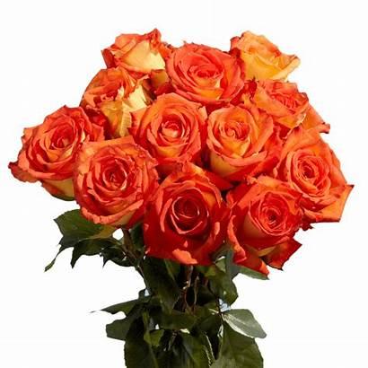 Yellow Orange Roses Bright Globalrose Caribbean Stems