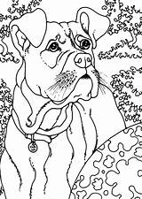 Coloring Boxer Dog Outside sketch template