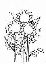 Sunflower Coloring Pages Sheets Three Sunny Template Printable Sunflowers Flowers Scouts sketch template
