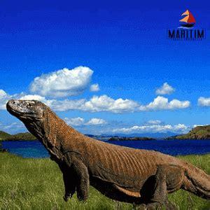 pulau komodo labuan bajo paket wisata  trip